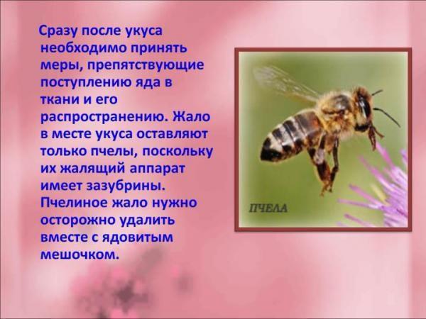 Что делать когда укусила пчела