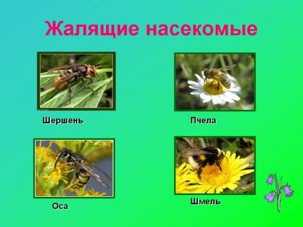 Человеку трудно изолировать себя от насекомых