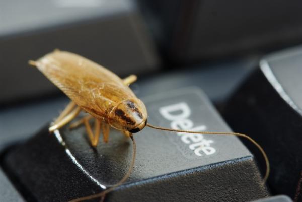 Избавляемся от тараканов в доме