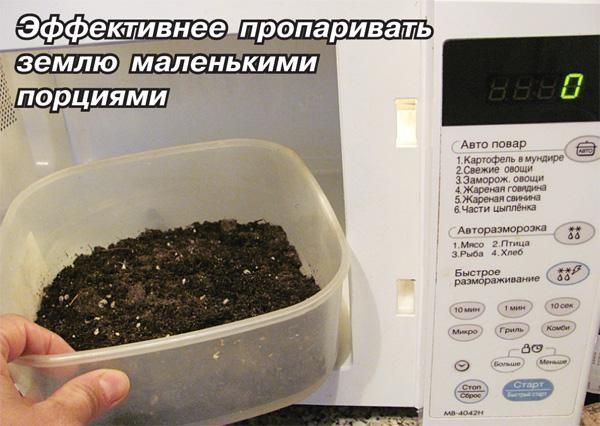 Для профилактики появления клеща на растениях грунт, купленных для пересаживания цветов, предварительно прогрейте в микроволновке или духовке