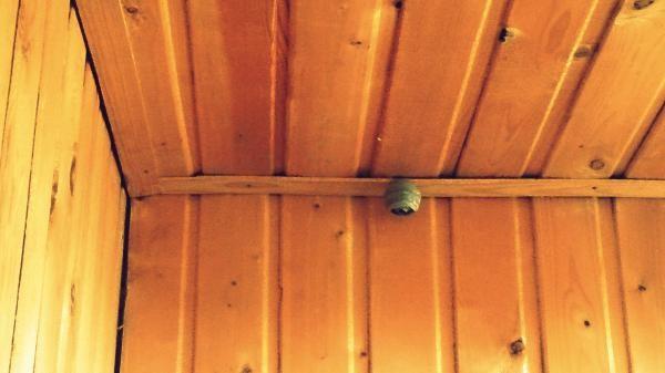 Осиное гнездо на балконе