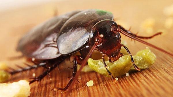 Размещать отраву нужно в тех местах, где тараканы чаще всего появляются