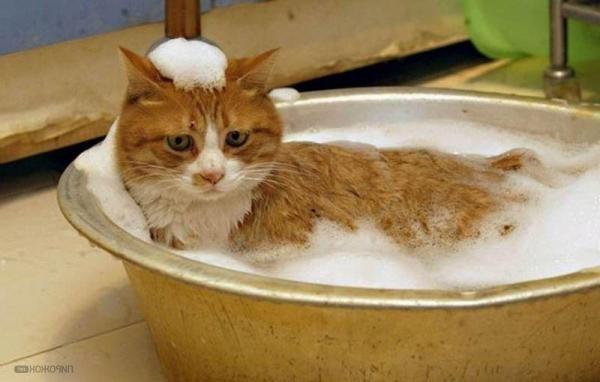 При мытье домашнего питомца шампунем избегайте попадания пены в глаза и в уши