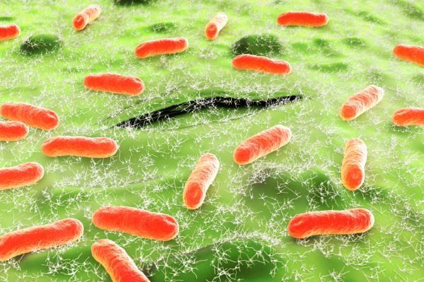 Осы являются переносчиками многих опасных заболеваний, в том числе кишечной палочки