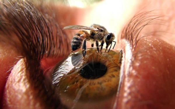 Пчела на глазу