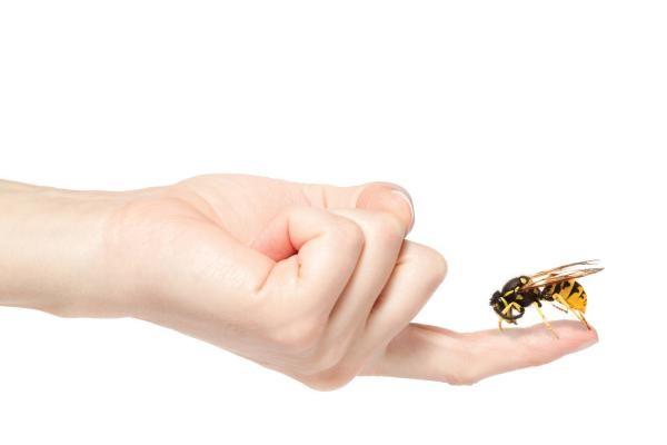 Чем помазать укус осы