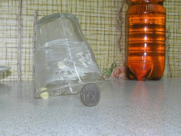 Ловушка для крыс с помощью сыра, стакана и монетки