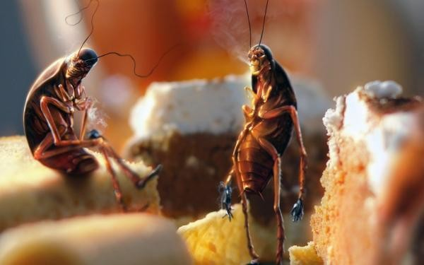 Одна из причин появления тараканов - антисанитарные условия в квартире