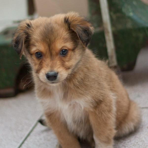 Для щенков и взрослых собак используются разные капли