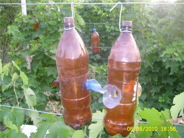 Ловушка из двух пластиковых бутылок