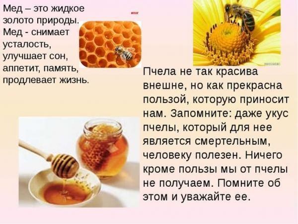Польза от меда