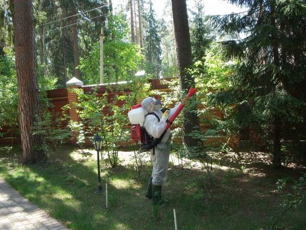Профессиональная обработка участка от комаров