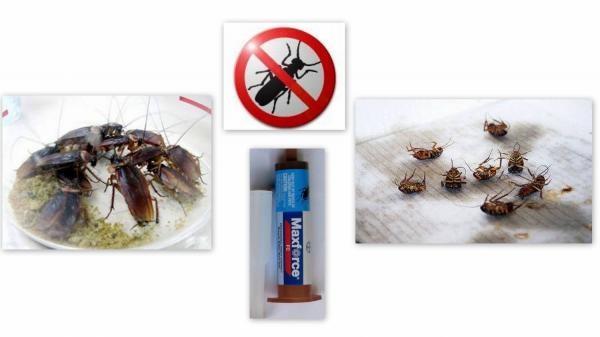 Максфорс - профессиональное средство от тараканов