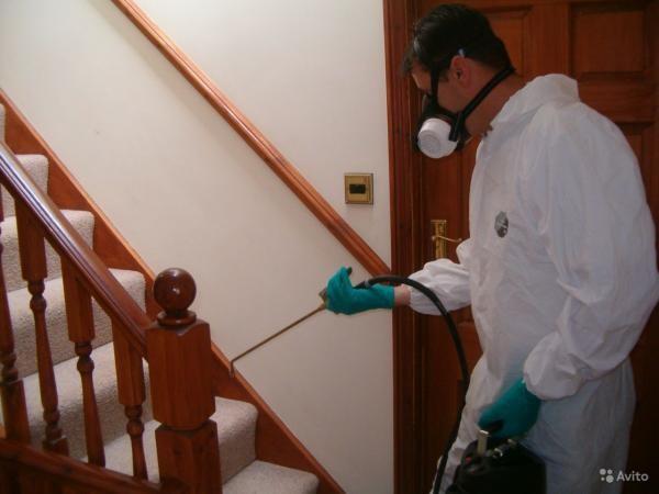 Профессиональная обработка дома от вредителей