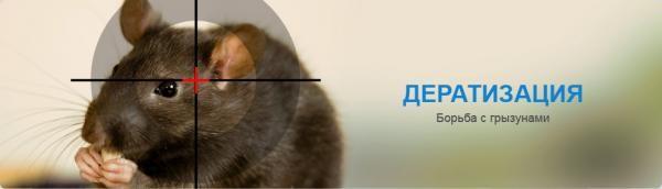 Не получается вывести грызунов самостоятельно - обращайтесь к специалистам, службы дератизации есть практически во всех городах России