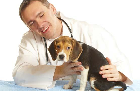 Если первая помощь не помогла и вы замечаете ухудшение состояния вашего питомца - лучше обратиться к ветеринару