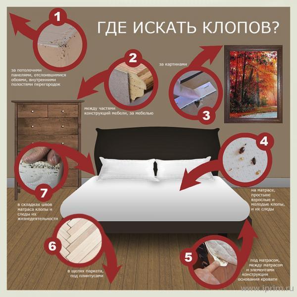 Приняв решение вывести постельных клопов навсегда нужно будет заняться капитальной уборкой и обработкой всей квартиры