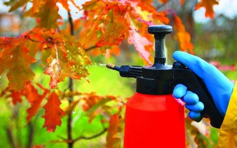 Для избавления от муравьев в огороде нужно опрыскать садовые деревья и другую растительность специальными растворами, или приготовленными самостоятельно