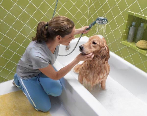 Для профилактики этого страшного заболевания уделяйте больше внимания уходу за собакой