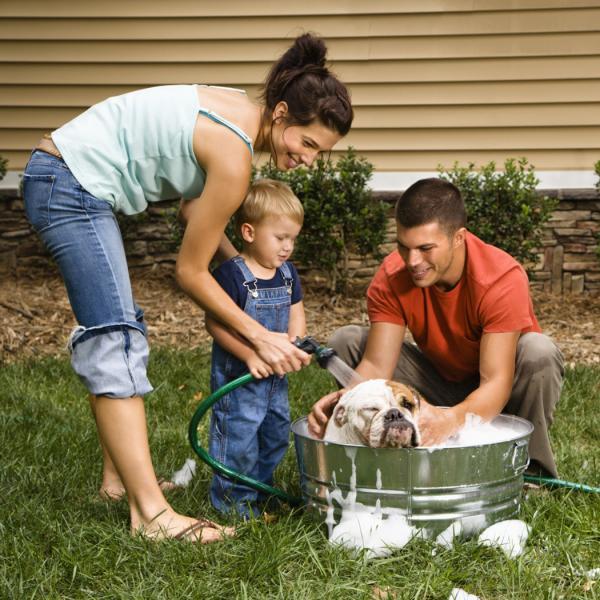 Лучшая профилактика появления блох - содержание дома в чистоте и периодическая обработка домашних питомцев специальными средствами