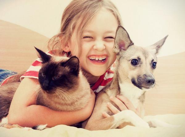 Заражение демодекозом от кошек и собак невозможно