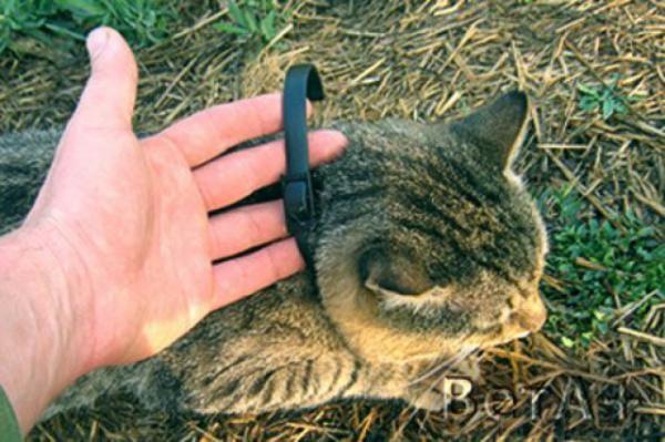 Часто в дом блохи попадаеют через домашних животных, поэтому рекомендуется для профилактики их появления приобретать специальные ошейники для домашних питомцев