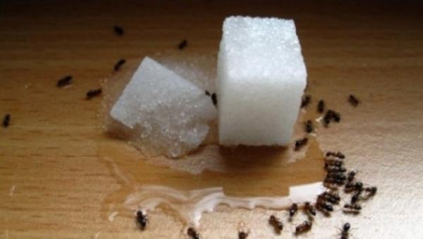 Наиболее частая причина появления муравьев в доме - оставление остатков еды в открытом месте