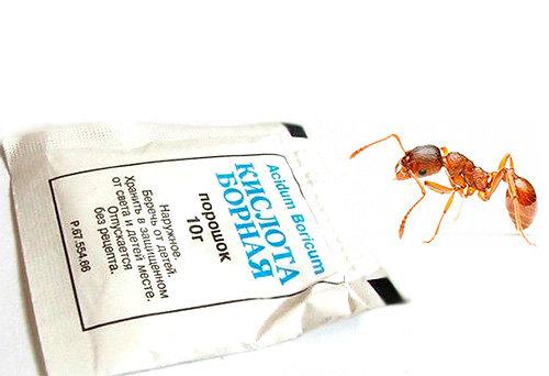Натыкаясь на приманку с борной кислотой муравьи несут яд в гнездо, уничтожая тем самым всю колонию