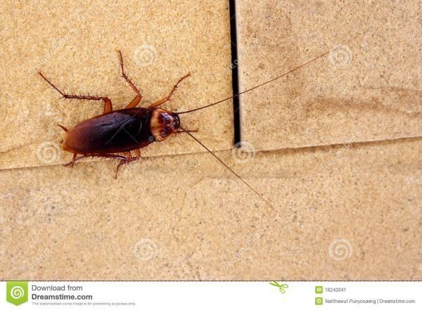Перед тем как начать дезинфекцию помещения необходиом заделать все щели, в которых могут прятаться тараканы