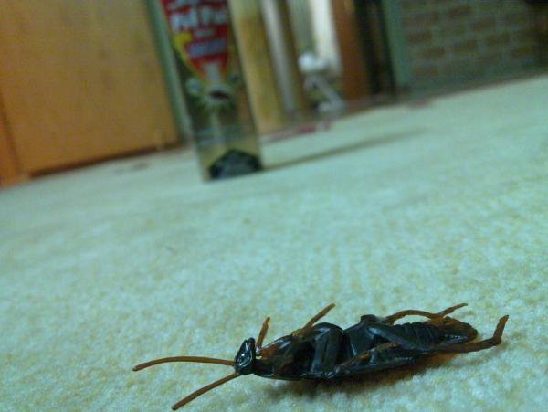 Уничтоженный таракан
