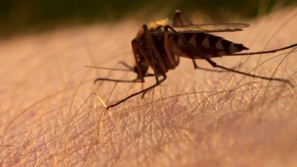 Способы борьбы с комарами