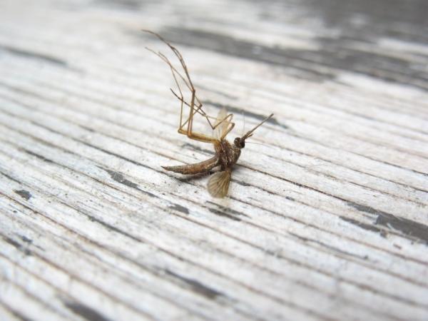 Нужно помнить что в состав спиралей входят химические вещества, которые эффективно убивают комаров, однако при неправильном использовании могут нанести вред для здоровья человека