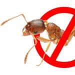 Как можно избавиться от муравьев в частном доме?