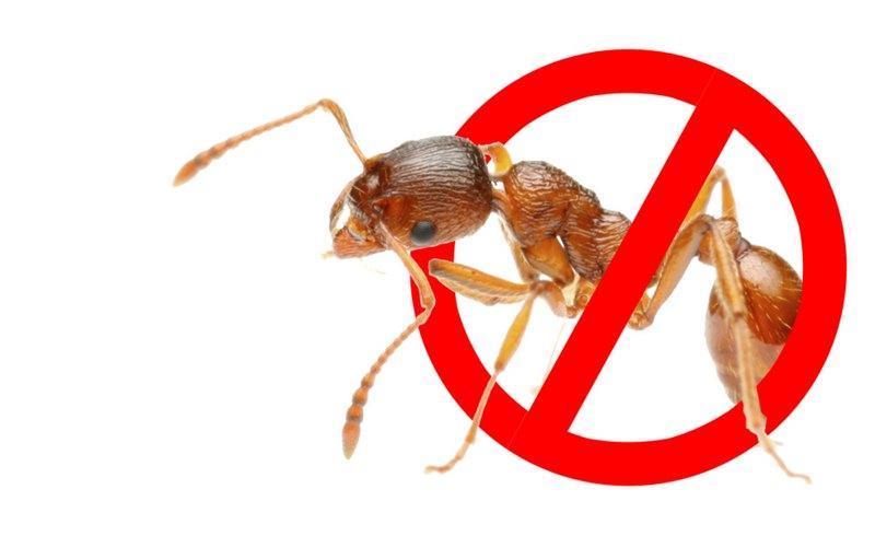 избавиться от муравьев в частном доме