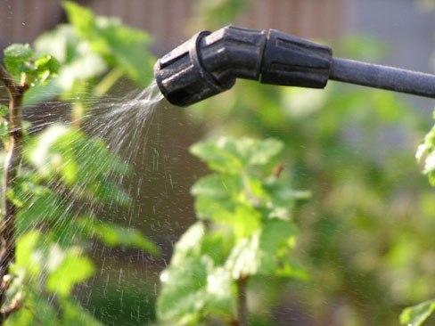 Смешайте молотый перец с водой и гелем для мытья посуды и опрыскайте растительность в огороде - этот метод должен помочь в борьбе с муравьями