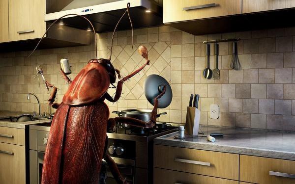Поддерживайте чистоту в доме и вовремя прибегайте к необходимым мерам борьбы с насекомыми, чтобы тараканы не стали хозяевами вашего дома