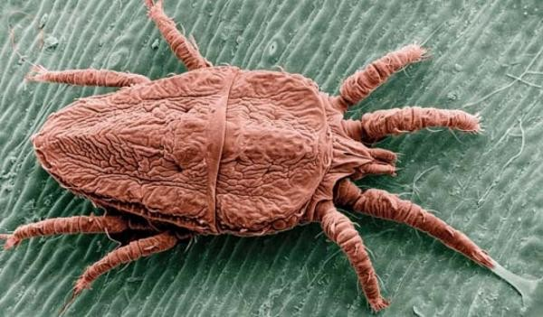 Вид паразита