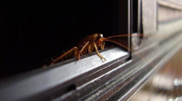 Даже если в вашей квартире идеальная чистота, существует высокая вероятность того, что тараканы просочатся к вам от соседей