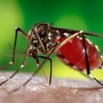 Что лучше использовать от укусов комаров для детей?