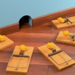 Эффективные средства от крыс