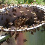 Как бороться с осами и пчелами на даче?