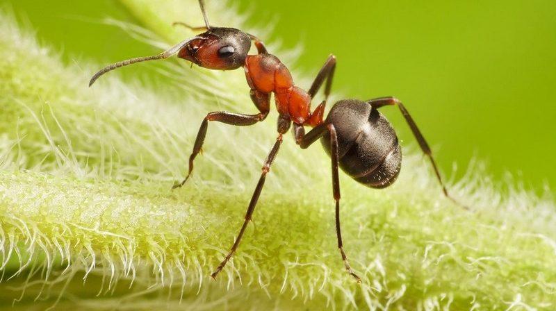 Как лучше избавиться от муравьев на дачном участке