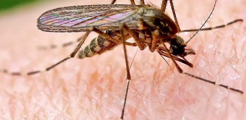 Как можно избавиться от комаров