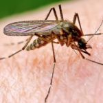 Как можно избавиться от комаров?
