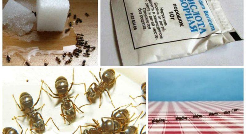 Как можно избавиться от муравьев в квартире