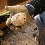 Как можно избавиться от ос в деревянном доме?