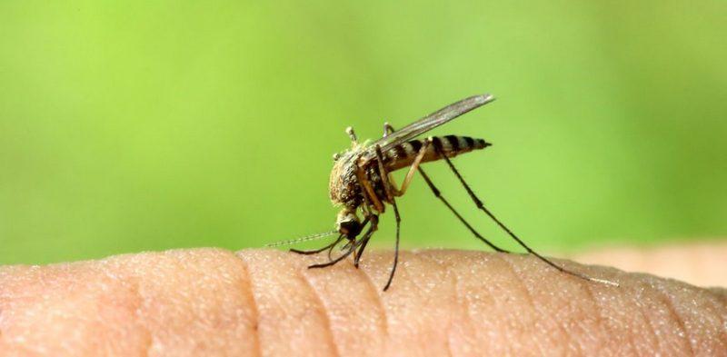 Какой звук отпугивает комаров