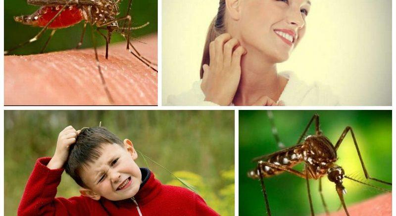Защитные меры против укусов комаров