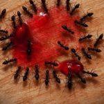Какие существуют эффективные средства от муравьев в доме