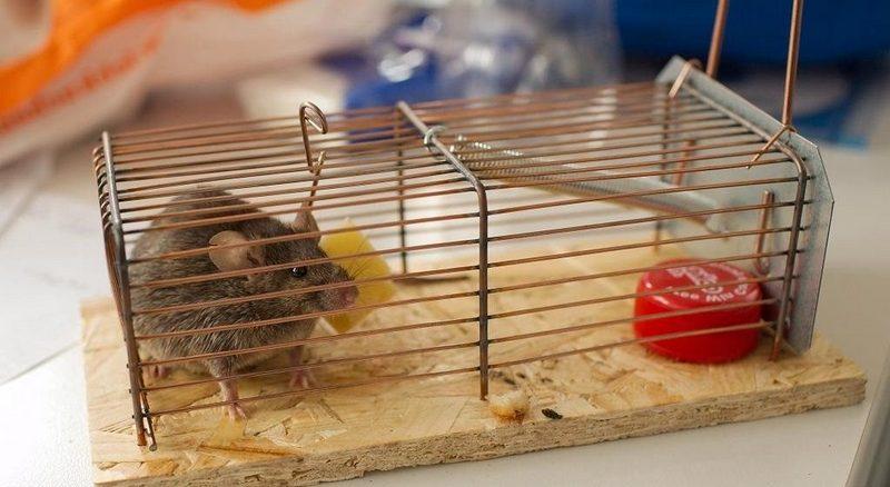 избавиться от мышей на даче